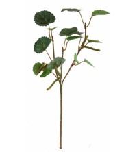 Bříza větvička