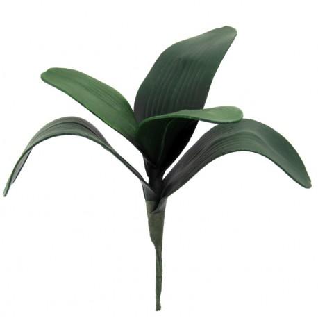 Listy orchideje