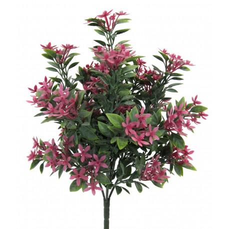 Keřík kvetoucí