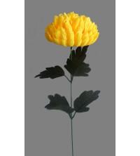 Chryzantéma