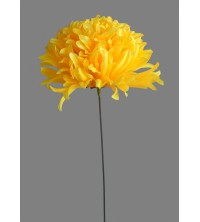Chryzantéma vazbovka velká