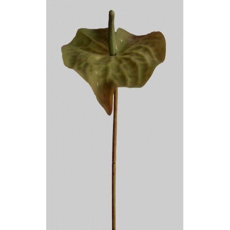Anthurie - zelená