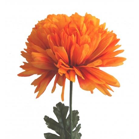 Chryzantéma XXL - oranžová