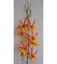 Orchidej