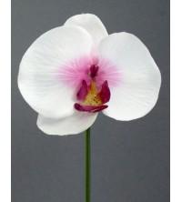 Orchidej zápich
