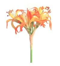 Lilie - b.oranžovo-žlutá