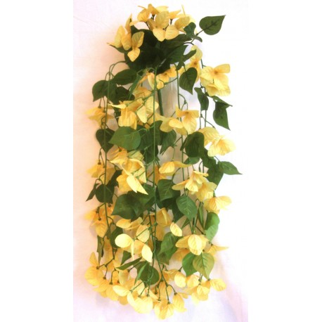 Převis kvetoucí - žlutá
