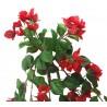Převis kvetoucí - červená