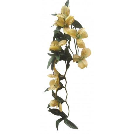 Převis kvetoucí - clemantis žlutý