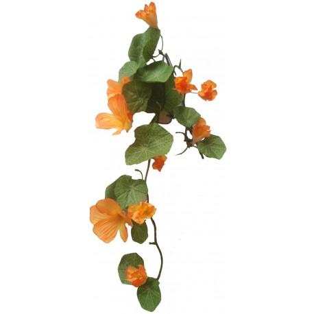 Převis kvetoucí - lichořeřišnice oranžová