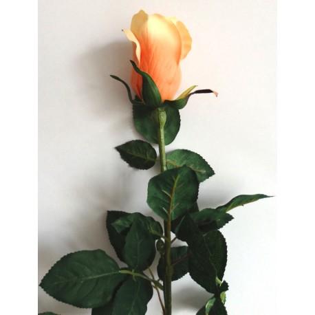 Růže  - lososová