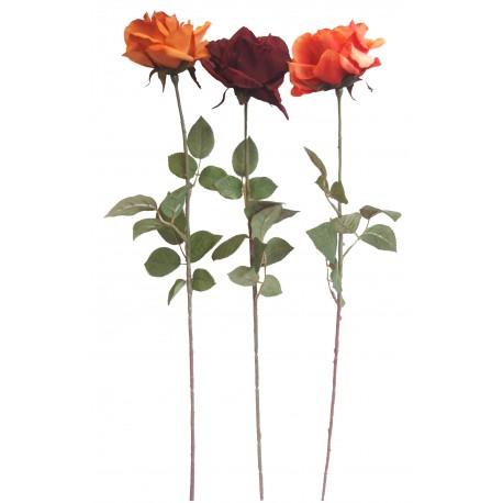 Růže - assort