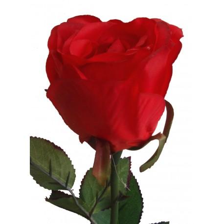 Růže  - RD - červená