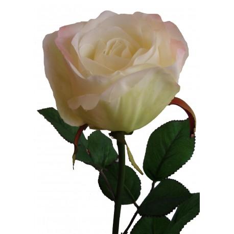 Růže  - WH - bílá