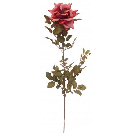 Růže  - st.růžová