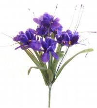 Iris  - tm.fialová