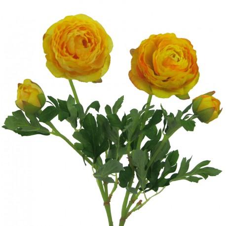 Ranunculus  - 209304-30 žlutá