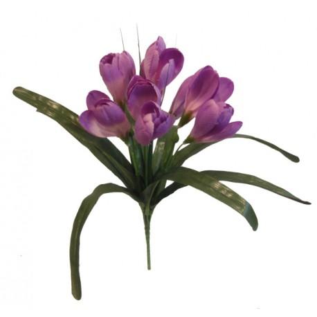 Krokus  - fialová