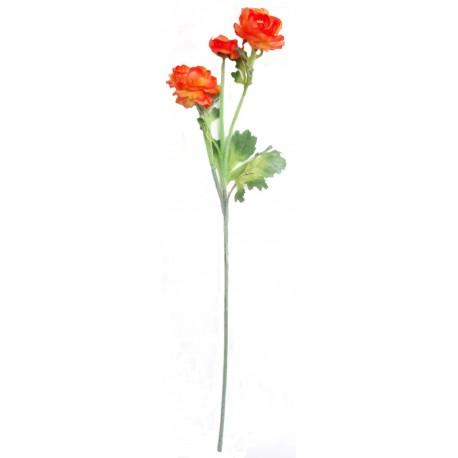Ranunculus  - oranžová