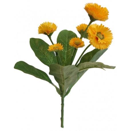 Bellis kytička  - žlutá
