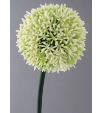Česnek květ