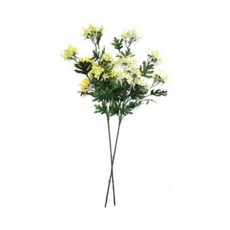 Chryzantéma  - krémová