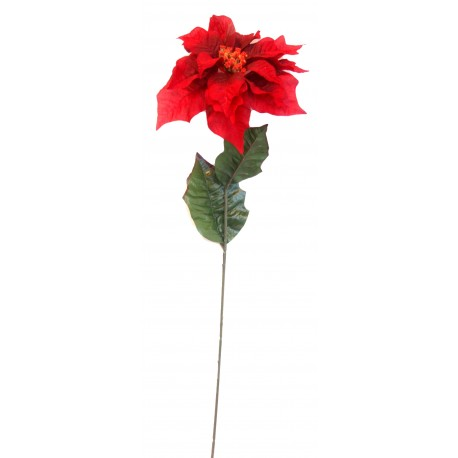Poinsettie