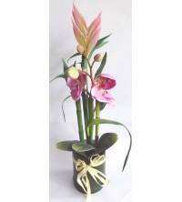 Orchidea/bambus