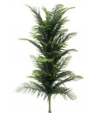 Nolfolk pine