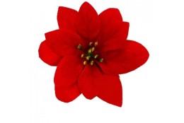 Poinsettia vazbovka