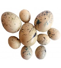 Vajíčka křepelčí