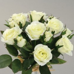Růže mini