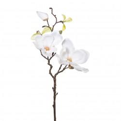 Magnolie větvička