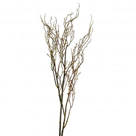 Větev jarní