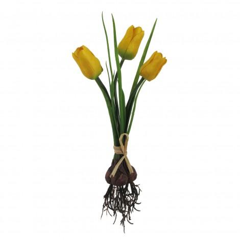Tulipán svazek s kořenem
