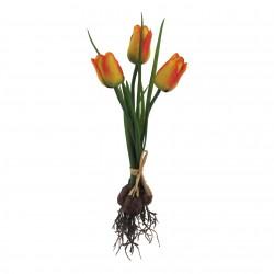 Tulipán svazek s cibulí