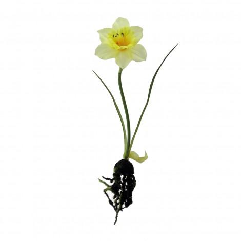 Narcis s kořínkem