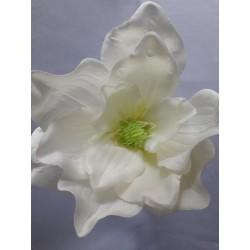 Magnolie vazbovka/krém
