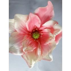 Magnolie vazbovka /růžová