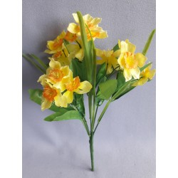 Narcis kyt., 5 barev