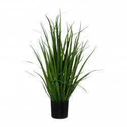 Tráva rákosová, Ozdobnice Velká 78 cm