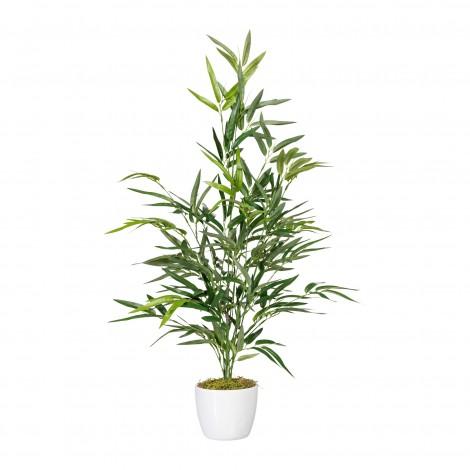 Bambus 70 cm v květináči