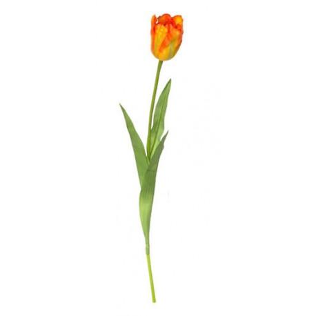Tulipán velký  - červená