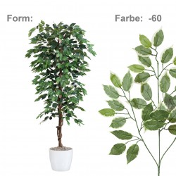 FICUS Benjamín zeleno-bílý, 150 cm