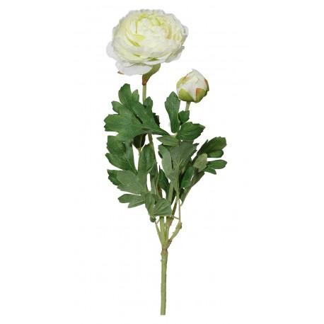Ranunculus  - 209304-48 bílá
