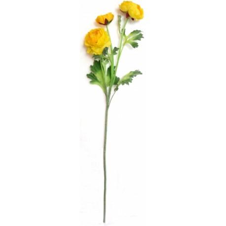 Ranunculus  - žlutá