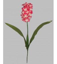 Hyacint  - růžová