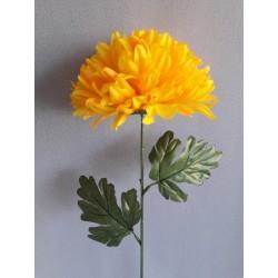 Chryzantéma velká