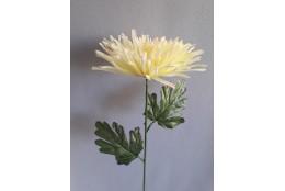 Chryzantéma jehlicová