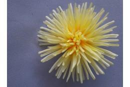 Chryzantéma vazbová jehlicová